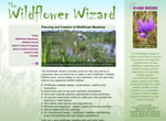 The Wildflower Wizard
